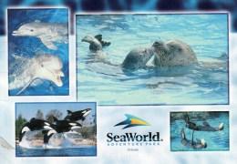 Postcard - SeaWorld. A - Dolphins