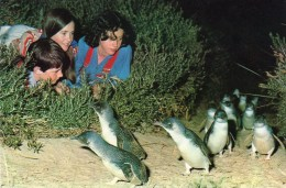 Postcard - Penguin Parade At Phillip Island. 3-V4 - Pájaros