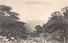 ¤¤   -   NOUVELLES-HEBRIDES  -  Paysage  -  Fougère Arborescente De 15 à 20 M De Hauteur  -  ¤¤ - Vanuatu