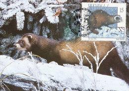 D19636 CARTE MAXIMUM CARD 1992 BELGIUM - FITCHEW PUTOIS CP ORIGINAL - Postzegels