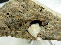 ARAGONITE DANS BASALTE   8, X 4, Cm PUY EN VELAY - Mineralien