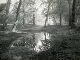 2 Paysages De Forêt Avec Reflets Dans 1 Flaque D'eau - Luoghi