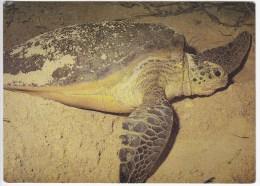 Malaysia , Green Turtle , Postcard - Turtles