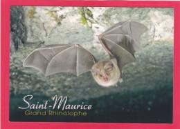 Post Card Of A Saint-Maurice, Grand Rhinolophe, Bat, Z9. - Tierwelt & Fauna
