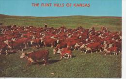CP The Flint Hills Of KANSAS - Kansas City – Kansas