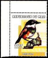 Mali 2000 Birds Vogel Oiseau - Cape Batis - Oiseaux