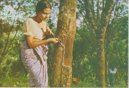 ASIE,SRI LANKA,RUBBER TAPPER,culture Du Caoutchouc,métier,sève,fe Mme Chimiste,rare, Ceylan - Sri Lanka (Ceylon)