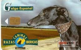 B-085 TARJETA DE ESPAÑA DEL PERRO GALGO ESPAÑOL   (PERRO-CAN-DOG) - España