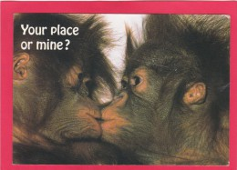 Post Card Of Monkeys, Posted UK, Z9. - Monkeys