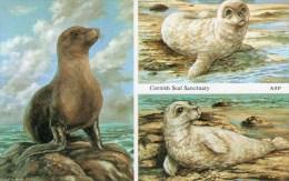 Postcard - Seals At Cornish Seal Sanctuary. A - Animals