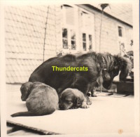 ANCIENNE PHOTO AMATEUR ** VINTAGE SNAPSHOT **  OUDE FOTO **  CHIEN DOG HOND DACHSHUND DACKEL TECKEL - Personnes Anonymes