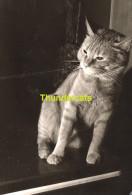 ANCIENNE PHOTO AMATEUR ** VINTAGE SNAPSHOT **  OUDE FOTO **  CHAT CAT KAT - Personnes Anonymes