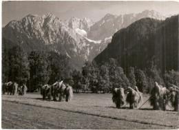 JEZERSKO- Traveled -1961th - Slowenien