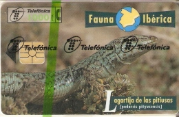 B-063 TARJETA DE ESPAÑA DE LA LAGARTIJA PITIUSAS (NUEVA-MINT EN BLISTER) LIZARD (FAUNA IBERICA) - Basisuitgaven