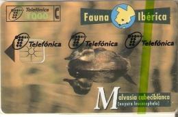 B-071 TARJETA DE ESPAÑA DE LA MALVASIA CABECIBLANCA (NUEVA-MINT EN BLISTER) DUCK (FAUNA IBERICA) - Basisuitgaven