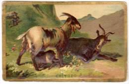 Chromo Animaux ( Gaufrée ) : Chèvres - Cromo