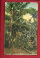 DIT-38  Indischer Palmweinzieher Kokospalme. Palmiers à Coco Indien. Circulé En Suisse En 1911. Petit Pli Angle - Inde