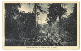 S2310 - Paysages D' Afrique - Coin De Forêt Au Gabon - Gabon