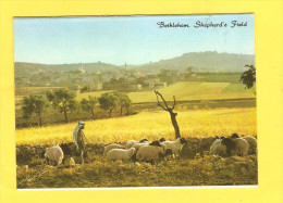 Postcard - Israel, Betlehem     (V 23974) - Israel