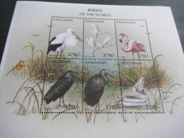 Tanzania-Birds - Oiseaux