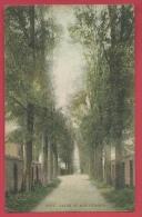 Dour - Allée Du Bois D'Epinoy - - Jolie Carte Couleur - 1908 ( Voir Verso ) - Dour