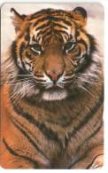 Topics (Animals) Tiger Animal & Calendar 1994, McCorquodale Print (Hard Plastic Card) - Phonecards