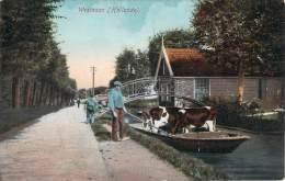 Hollande - Westzaam - Vaches Dans Une Barque, Colorisée, Blooker's Daalders Cacao, Chocolat - Nederland