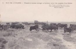 MAS DE L'AMAREE   MANADE DE TAUREAUX SAUVAGES (DIL37) - Toros