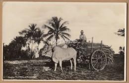 Trinidad  Carting Sugar Cane  RP  T93 - Trinidad