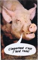 Cpm Animaux Humoristiques An 46 TETE DE COCHON - Cochons