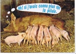 Cpm AH SI J AVAIS CONNU PLUS TOT LA PILULE - Cochons