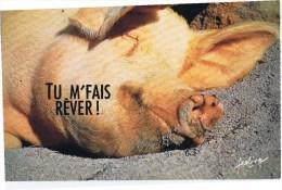 Cpm TU M FAIS REVER - Cochons