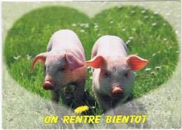 Cpm  ON RENTRE BIENTOT - Cochons