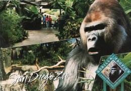 Postcard - Gorilla (Lowland Gorilla) Tropics At San Diego Zoo. 556 - Monkeys