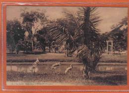 Carte Postale  Viêt-Nam  Hanoï Le Jardin Botanique    Trés Beau Plan - Viêt-Nam