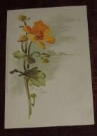 KLEIN, CATHARINA Kunstler Postkarten, Serie Nº 1056, Blumenranken, Meissner & Buch, No Circulada - Klein, Catharina