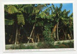 SPAIN - AK 219479 La Palma - Bananenplantage Bei Los Llanoss - La Palma