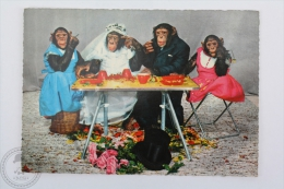 Nice Topic Postcard - Monkey Wedding/ Family - Bride, Groom & Bridesmaids - Edited Kruger, Made In Western Germany - Monos
