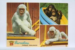 Nice Topic Postcard - Monkeys/ White Monkey Snowflake Gorilla/ Copito De Nieve Zoo Barcelona - Monos