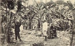 SURUNAME  Plantation De Bananes - Cartes Postales