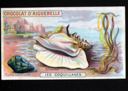 CHROMO, CHOCOLAT D´AIGUEBELLE, COQUILLAGES, STROMBE - Aiguebelle