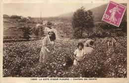 Ref D934- Alpes Maritimes -la Cote D Azur Fleurie -la Cueillette Des Jasmins  -parfum- Parfumerie  -carte Bon Etat  - - Cultures