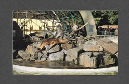 ANIMAUX - ANIMALS - MONKEYS - SINGES - SEALS - PHOQUES - SEA LIONS - OTARIES - VANCOUVER B.C. - STANLEY PARK - Singes