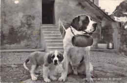 CHIENS DU GRAND SAINT BERNARD - Dogs