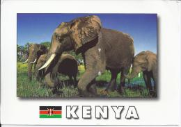 Kenya - Olifanten - Éléphants
