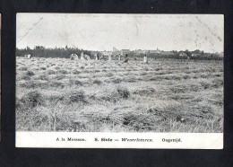 Belgium  Westvleteren : S. SIXTE : Oogsttijd  Carte Postale Vintage Original Postcard Cpa Ak (W4_608) - Vleteren