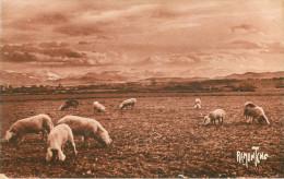 Animaux - Cochons - Cochon - Dép 64 - Pyrénées Atlantiques - Le Béarn - Bon état - Cochons