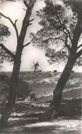 DEPT 13 - LA PROVENCE - LE MOULIN DE DAUDET - VAN - - France