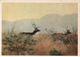 Bactrian Deer - Cervus Elaphus Bactrianus - 1958 - Tajikistan USSR - Unused - Tadjikistan