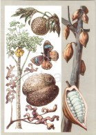 Cacao - Seychelles Nut - Papaw - Breadfruit - Fabulous Fruits - Amazing Plants - 1976 - Russia USSR - Unused - Flowers, Plants & Trees